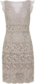 Lace &amp; Sheer Dress, Stone - style: shift; neckline: slash/boat neckline; sleeve style: angel/waterfall; fit: tailored/fitted; pattern: plain; waist detail: fitted waist; back detail: low cut/open back; predominant colour: stone; occasions: evening, occasion; length: just above the knee; fibres: cotton - 100%; sleeve length: short sleeve; texture group: lace; trends: high impact florals; pattern type: fabric; pattern size: standard; embellishment: lace