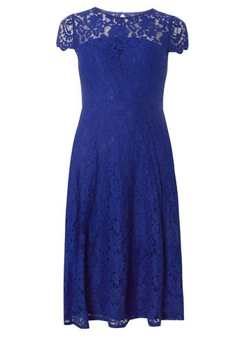 Womens Cobalt Lace Scallop Midi Dress Cobalt - sleeve style: capped; waist detail: fitted waist; predominant colour: royal blue; occasions: evening, occasion; length: on the knee; fit: fitted at waist & bust; style: fit & flare; fibres: polyester/polyamide - 100%; neckline: crew; hip detail: subtle/flattering hip detail; sleeve length: short sleeve; texture group: lace; pattern type: fabric; pattern size: standard; pattern: patterned/print; shoulder detail: sheer at shoulder; season: a/w 2016; wardrobe: event